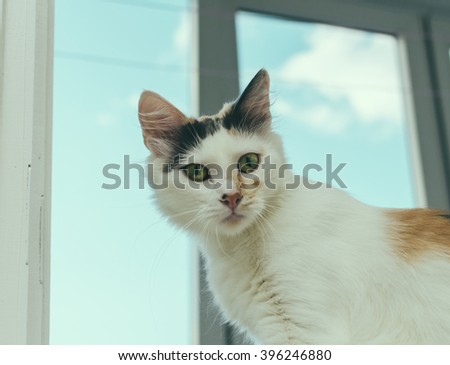 Cat with green eyes on the home window - stock photo
