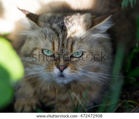 Cat with green eyes on the street with the small depth of sharpness
