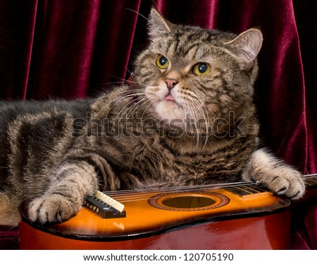 Cat with guitar in studio - stock photo