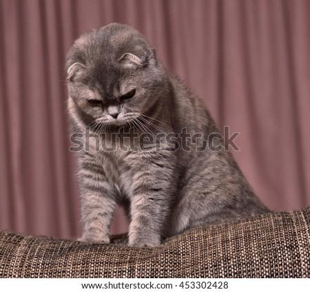cat eat catnip