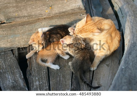 Cat with kittens in a boat