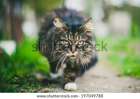 Cat with long hair on natural background  - stock photo