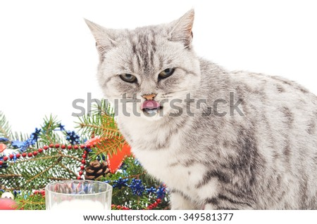 Cat with milk near a Christmas tree on a white background.