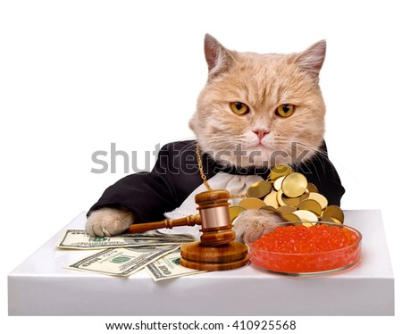 Cat with money and red caviar.Gavel.Judge.