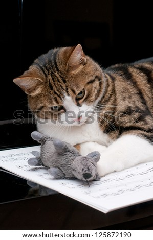 Cat with mouse on musical score - stock photo