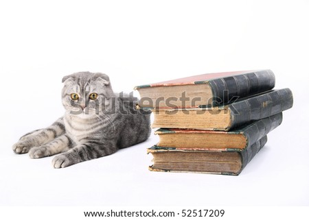 cat with old books - stock photo