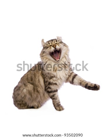 Cat with open mouth isolated on white background - stock photo