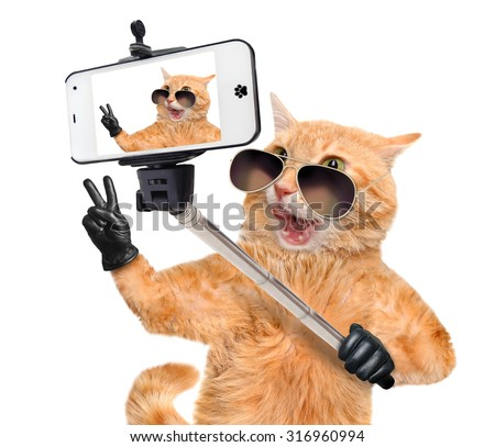 Cat  with peace fingers in black leather  taking a selfie together with a smartphone. - stock photo