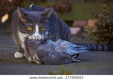 Cat with prey