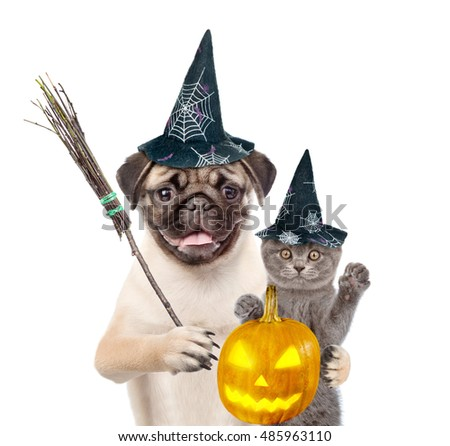 Cat with pumpkin and Dog in hat for halloween holding witches broom stick. isolated on white background