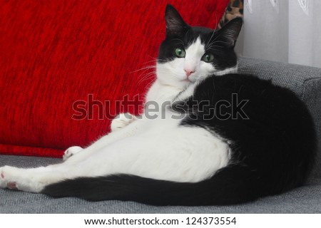 cat with red pillow - stock photo