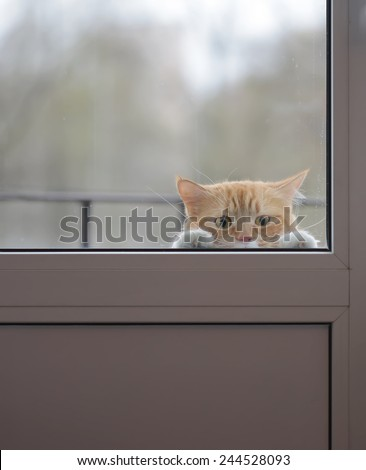 Cat with sad eyes behind the glass door