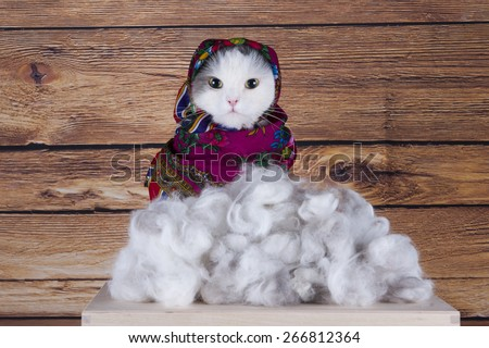 Cat with scarf sells his wool - stock photo
