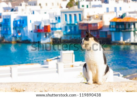 Cat with small Venice in background in Mykonos island Greece Cyclades - stock photo