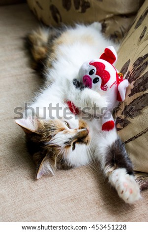 Cat with toy,the cat with a toy sleeps,the sleeping kitty has a rest after game,sleeping cat with a doll,lovely cat, fine - stock photo