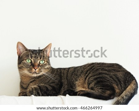 cat with white back 2
