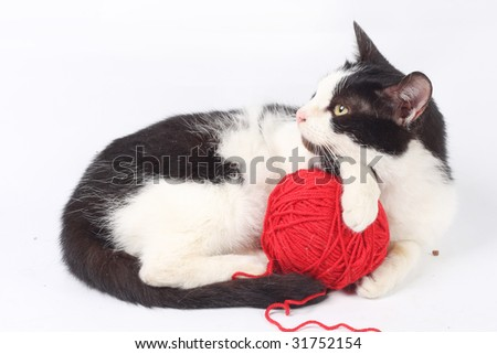 Cat with woolen ball