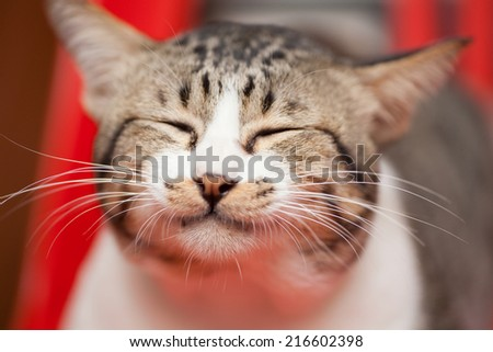 Cat Yawning - stock photo