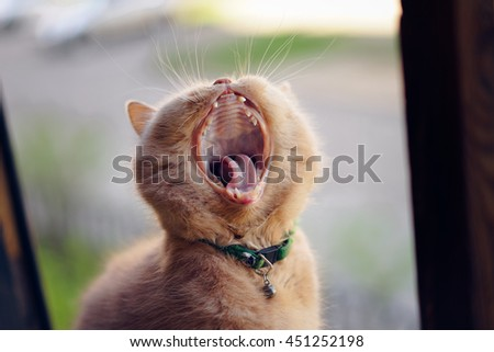 Cat yawning at the window - stock photo