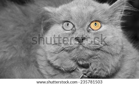cat yellow eye   black&white  background
