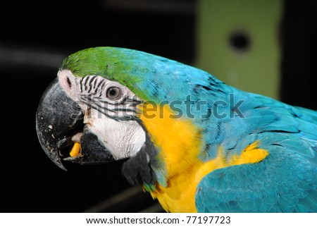 catalina macaw eating