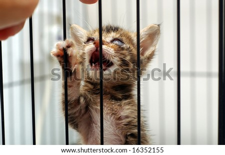 Cataract Rescue Kitten - stock photo