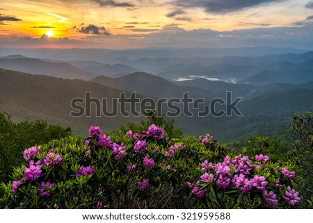 Catawba Rhododendron take center stage to this misty scene along the Blue Ridge Parkway in north Carolina. - stock photo