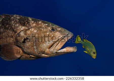 Catch me if you can - stock photo