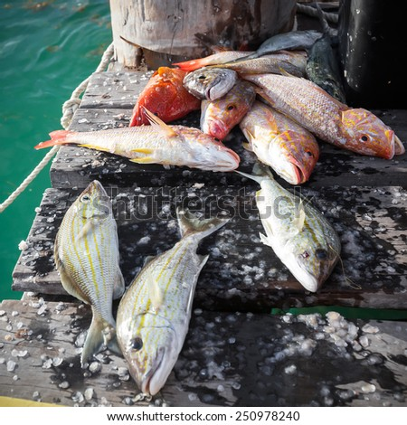 Catched fish on wooden pier, closeup  - stock photo