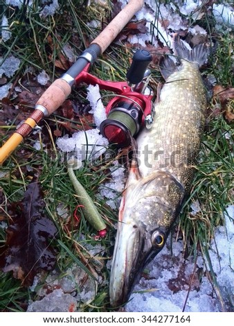 catched Winter Pike  - stock photo