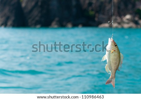 Catching a Perch Fish