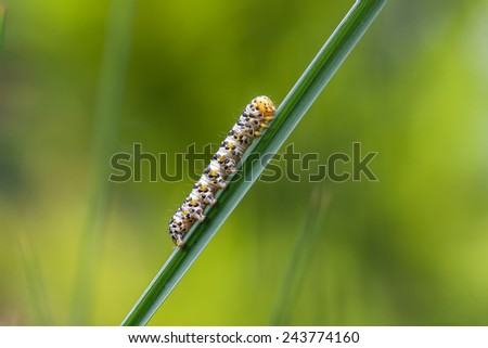 Caterpillar crawling on green twig - stock photo