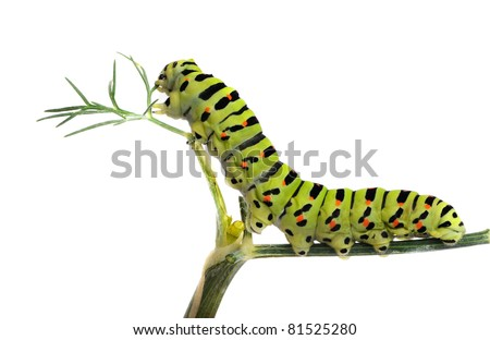 Caterpillar on grass isolated on white background - stock photo