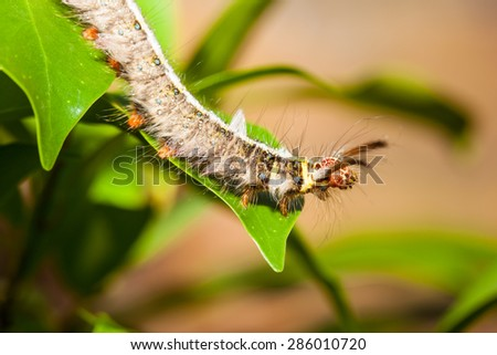 caterpillar on green leaf - stock photo