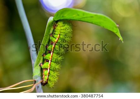 Caterpillar on leaf - stock photo