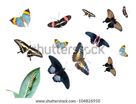 Caterpillar on the leaf, and a group of different butterflies isolated on white background - stock photo