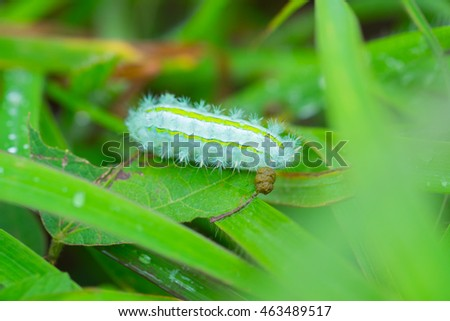 caterpillar worm eating leaf