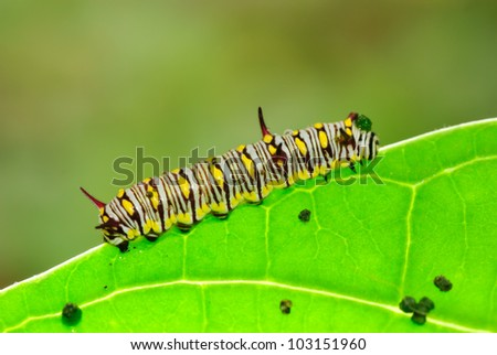 Caterpillars on the leaves. - stock photo