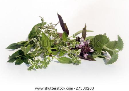 Catnip, red basil, lemon thyme, thai basil, and mint - stock photo
