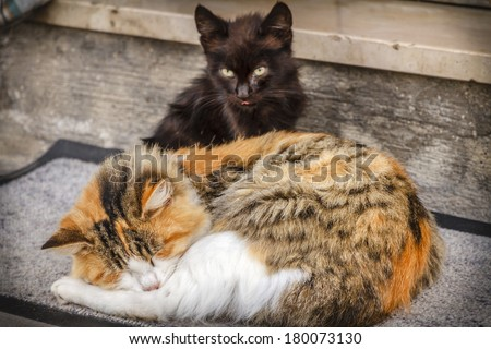 Cats. Adult cat sleeping and kitten sitting in front of a house.