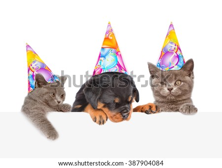 Cats and Dog in birthday hats peeking from behind empty board. isolated on white background - stock photo