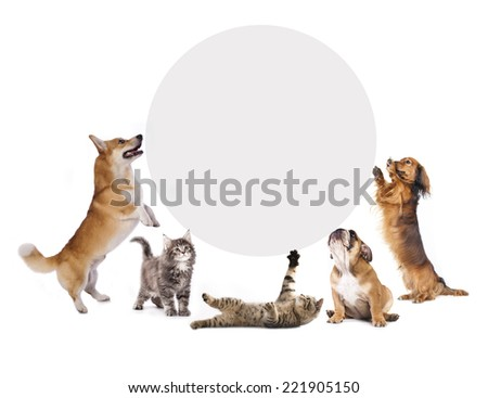 cats and dogs holding a cork banner - stock photo