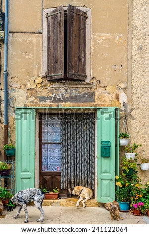 Cats and dogs in fron of a old door in a village in the south of France - stock photo