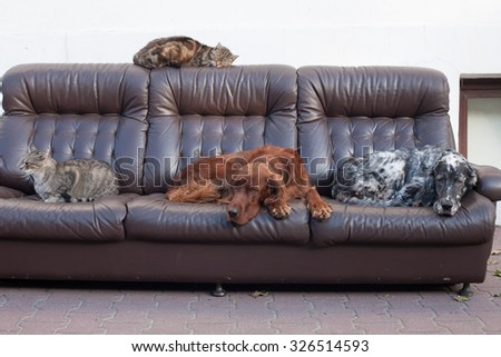 cats and dogs on the couch