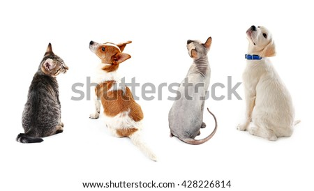 Cats and dogs together, view from the back, isolated on white - stock photo
