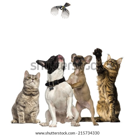 Cats and Dogs trying to catch a bird flying - stock photo