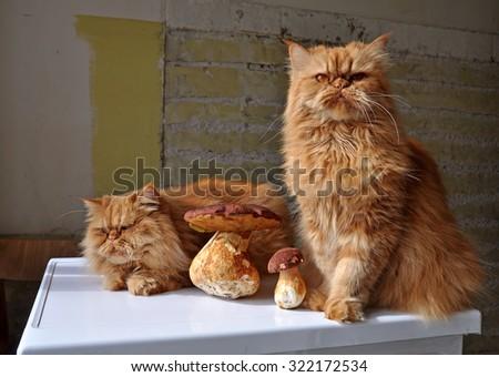Cats and mushrooms - stock photo