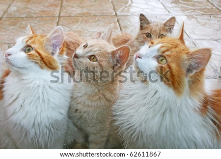Cats behind window in rain. - stock photo