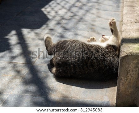 Cats/cat playing in the sun