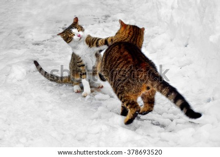 Cats fight (father vs. kitten) - stock photo